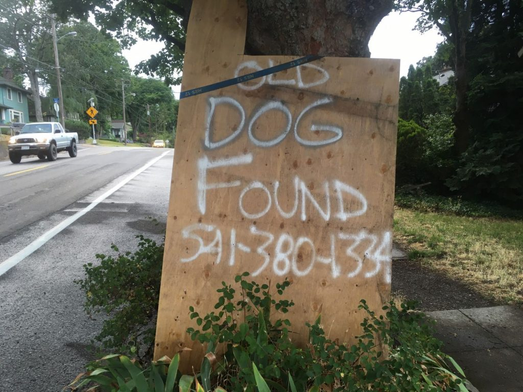 Old Dog Found in Hood River